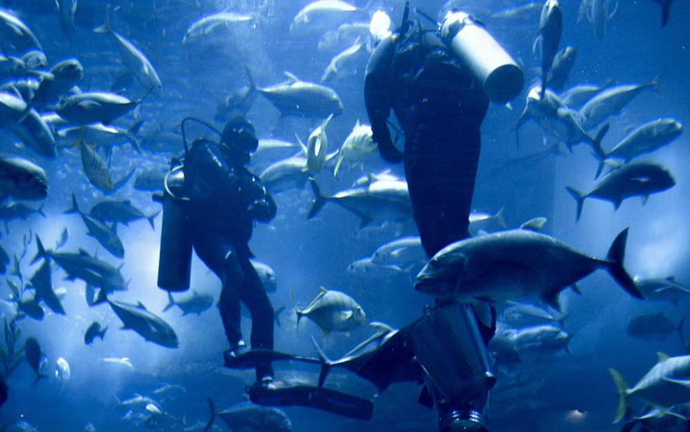 Что посмотреть в Дубае: Дубайский аквариум